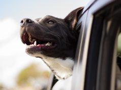 Belloday – Die neue Hunde Suchmaschine