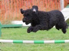 Gute Hundeschule finden mit Belloday