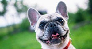Das richtige Hundefutter finden mit Belloday